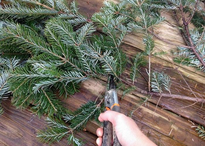 cortando ramas de pinheiro