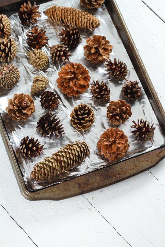 pinhas perfumadas na bandeja de forno para secar e abrir