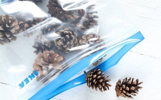 pinhas guardadas em saco plástico com zipe