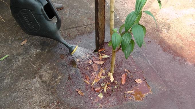regando a planta