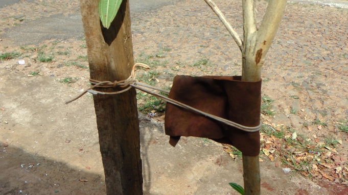 caule com proteção de couro
