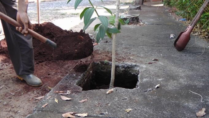 adicionando terra no buraco