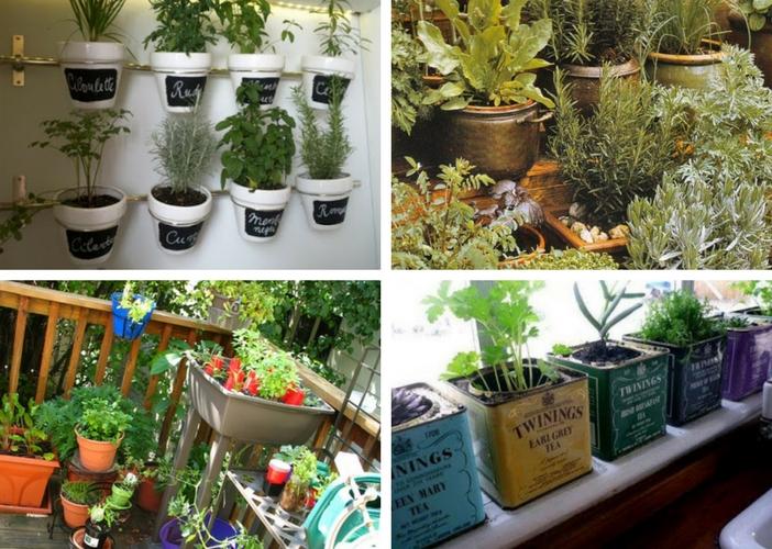 4 maneiras diferentes de plantar suas ervas aromáticas