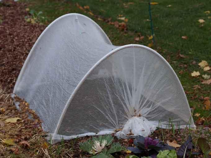 proteção de tela sobre as plantas