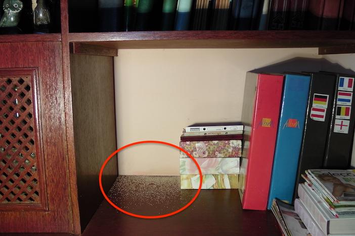 estante infestada por cupins