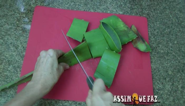 cortando a folha de aloe vera