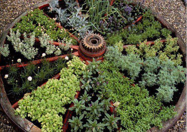 horta de ervas aromáticas com forma redonda