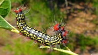 lagarta sobre azaleia