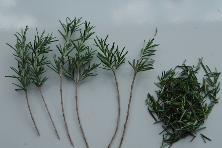 ramos de alecrim sem folhas na parte debaixo do ramo