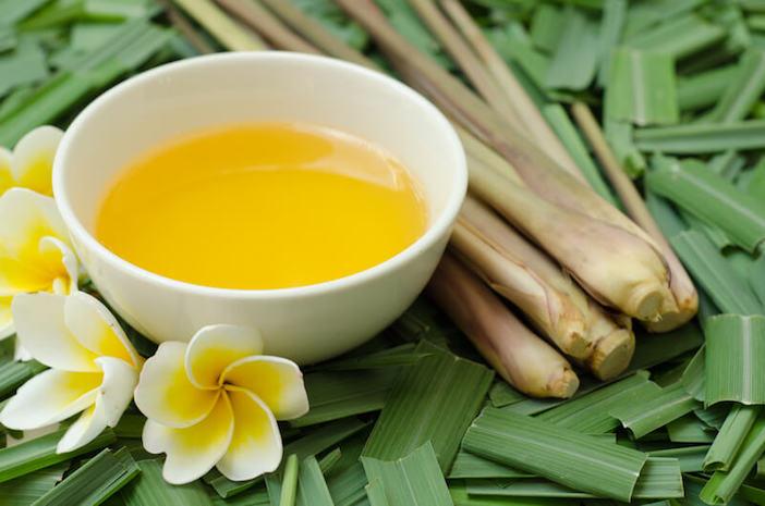 bow de oleo essencial de citronela