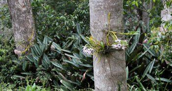orquídea no tronco de uma arvore