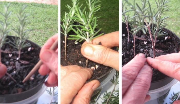 plantando as estatais num vaso