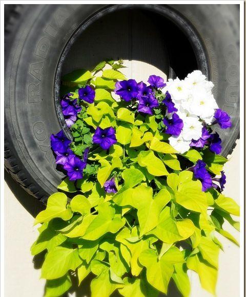 pneu com a planta escolhida