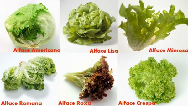 diferentes tipos de alface