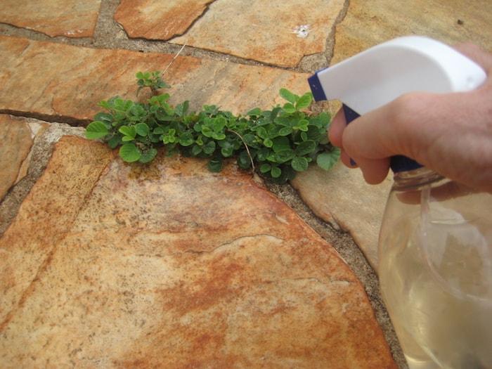 pulverizar vinagre nas ervas daninhas