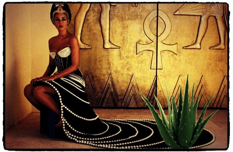 cleopatra junto com uma planta de aloe vera