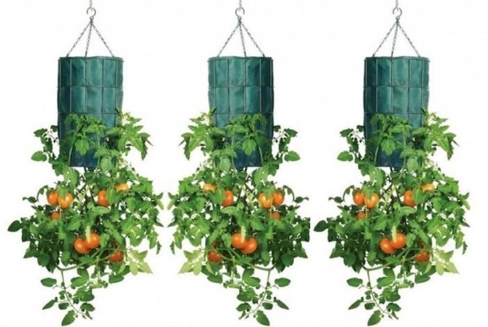 tomates plantados de cabeça para baixo