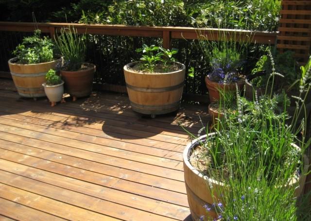 tomates plantas em barril de vinhos