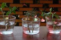 3 recipiente co erva em água