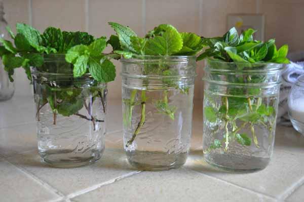 pote de vidro com ervas