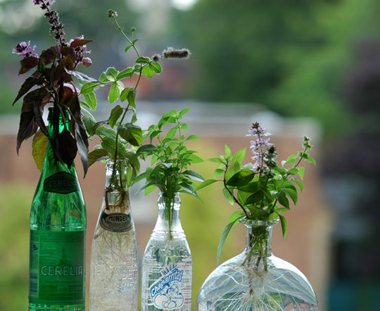 ervas plantada em diferentes tipos de garrafa