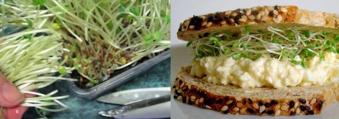 cortando broto de agrião sanduíche ovo e agrião