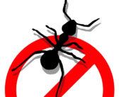 7 Maneiras de livrar das formigas sem usar pesticidas