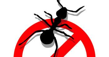 formiga proibido