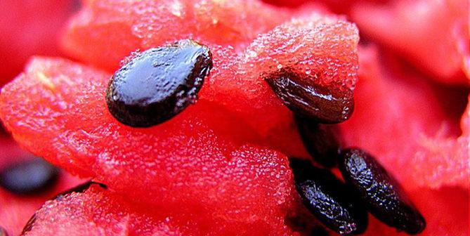 Benefícios da Sementes de Melancia para Pele, Cabelo e Saúde