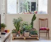 9 Plantas para  Interiores com Pouca Luz