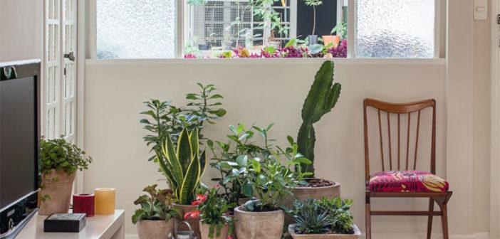 varias plantas numa sala