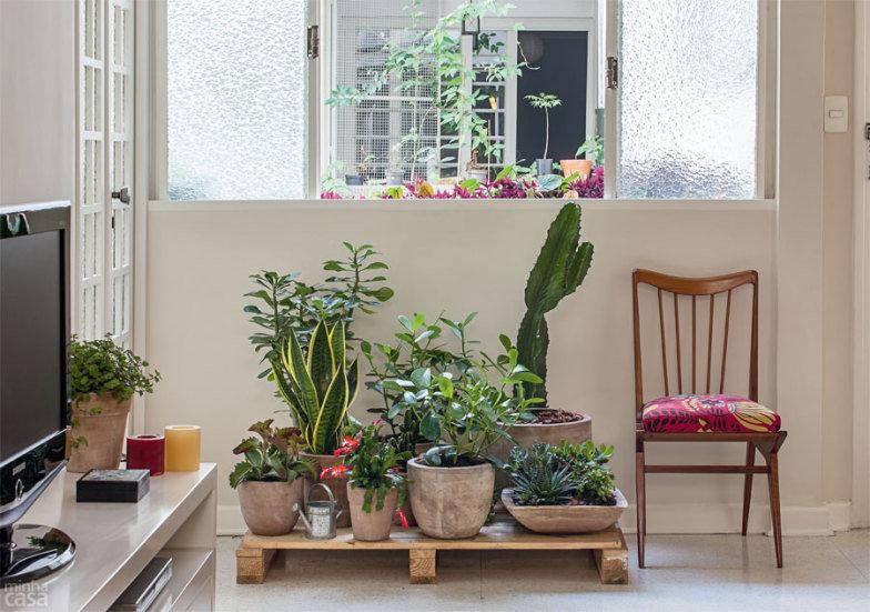 9 plantas para interiores com pouca luz assim que faz for Flores para interiores con poca luz