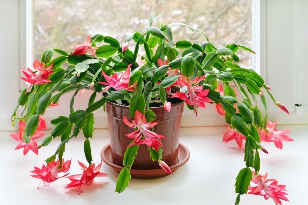 cactos da páscoa saudável com flores