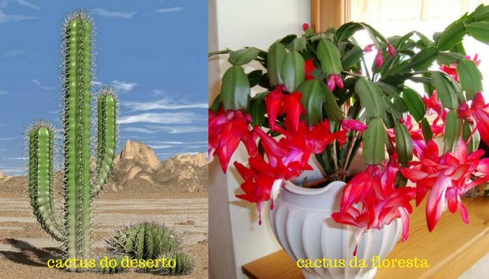cactus do deserto e cactus da floresta