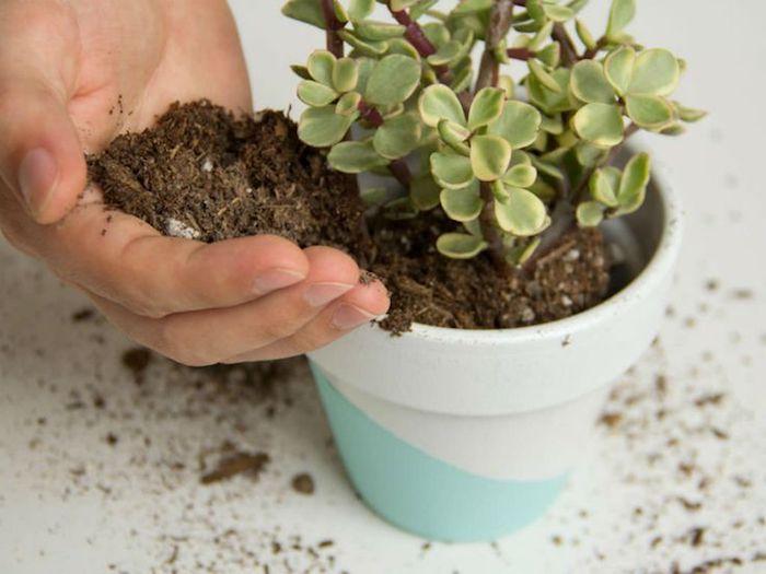 colocando terra num vaso de suculentas