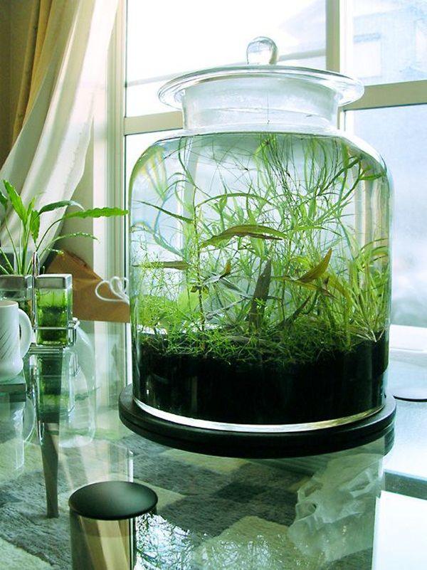 garrafão de vidro com plantas e água .