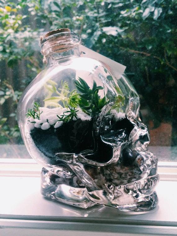 cranio de vidro com plantas dentro