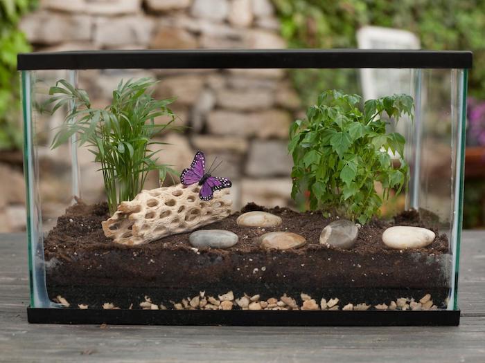 tanque de peixes com varias plantas e pedras dentro