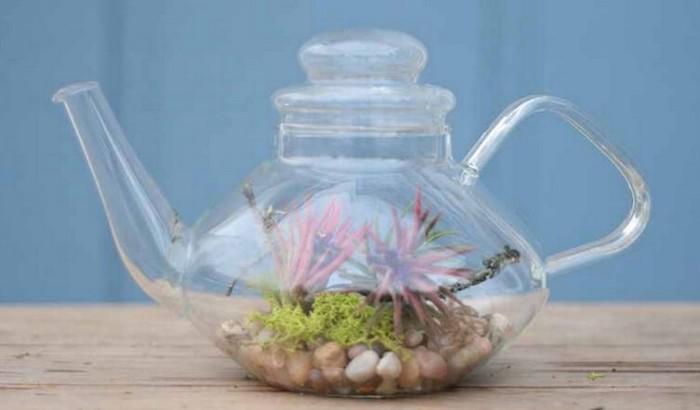 bule de cha de vidro cheio de plantas no interior