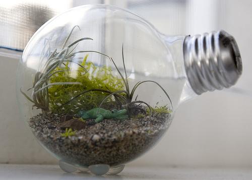 bomba de luz com plantas dentro