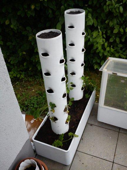 2 tubos de pvc fincados na terra com varios furos para plantar morangos