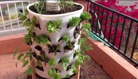 balde cheio de terra com plantas de morango nas laterais