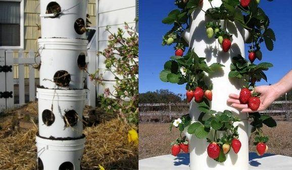 canteiros verticais para plantar morango