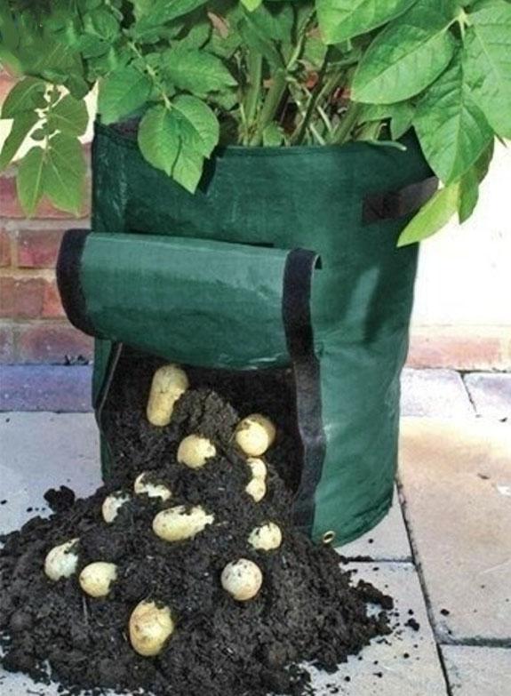 bolsa aberta saindo com as batatas saindo