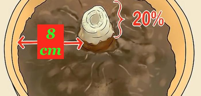 rizoma 20% acima do solo