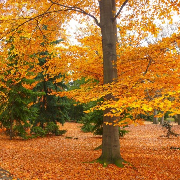 arvores com folhas alaranjadas de outono