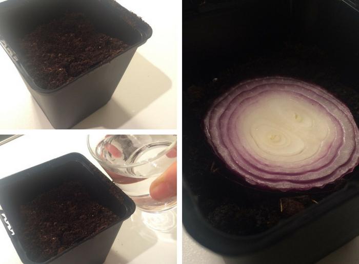 vasinho de terra, adicionando agua e com cebola no centro
