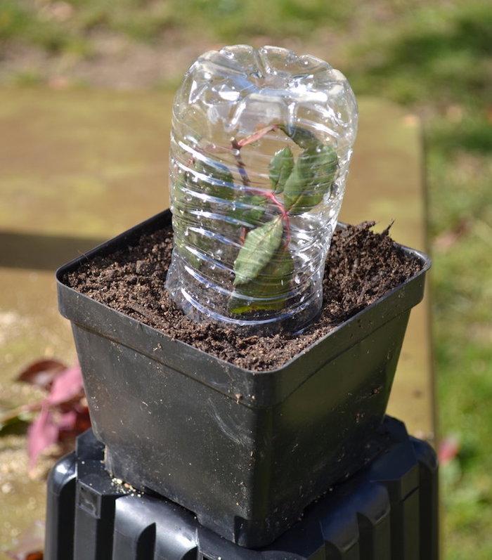 vaso com muda sobre um pote de plastico