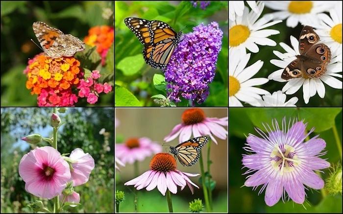plants diversas e borboletas