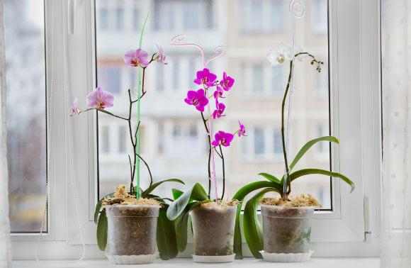 orquídeas diante da janela